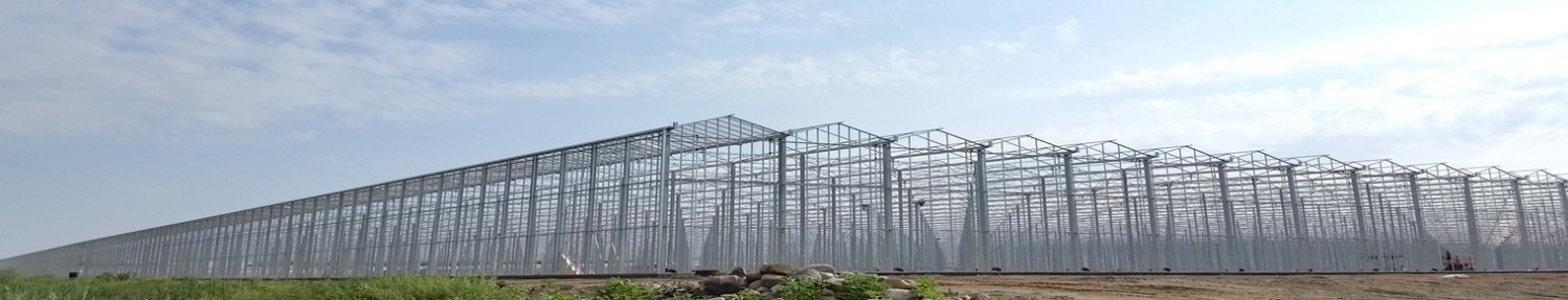 Insect Bug Netting for Venlo Seperate Vents Greenhouses