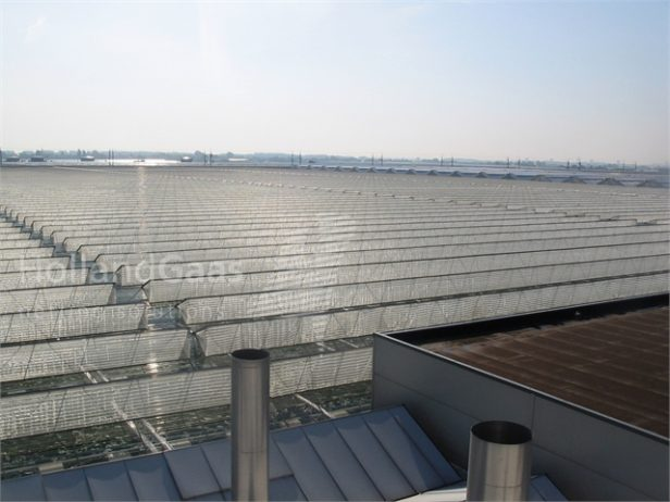 Insect-Bug-Netting-for-Venlo-Continuous-Ridge-Greenhouses03