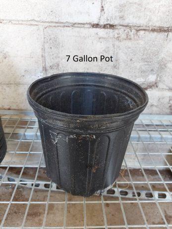 7-Gallon-Pot